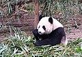 Chengdu Panda Base 成都貓熊基地 - panoramio.jpg