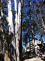 Chile, San Pedro de la Paz (43217114154).jpg
