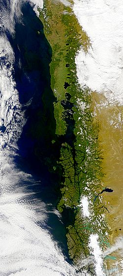 Chilean coastal blooms.JPG