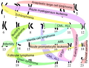 نمایش چند جابهجایی کروموزومی