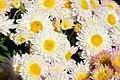 Chrysanthemum Lantern 0zz.jpg
