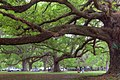 City Park - panoramio (4).jpg