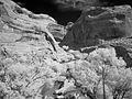 Cliff Arch, Coyote Gulch (3685438862).jpg