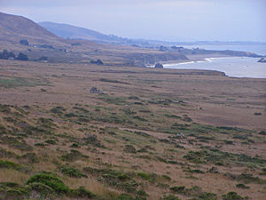 Goat Rock Beach - The coastal prairie above Goat Rock Beach supports a diversity of upland species.