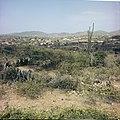 Collectie Nationaal Museum van Wereldculturen TM-20029529 Gezicht op een landschap met cactussen en struikgewas Aruba Boy Lawson (Fotograaf).jpg