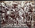 Collectie Nationaal Museum van Wereldculturen TM-60062270 Werkzaamheden op een bananenplantage Jamaica J.W.C. Brennan (Fotograaf).jpg