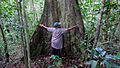 Collecting... Atlantic forest, northern littoral of Bahia, Brazil (15269824595).jpg