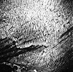 Columbia Glacier, Terminus, September 15, 1975 (GLACIERS 1272).jpg
