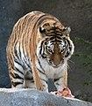 Columbus zoo (2302710941).jpg