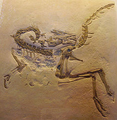 Compsognathus longipes