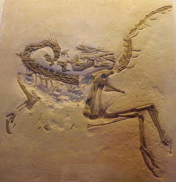 Compsognathus longipes cast2
