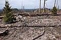 Continental Divide Trail - Flickr - aspidoscelis (48).jpg