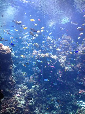Fish locomotion - Fish propel themselves through water using many different mechanisms.