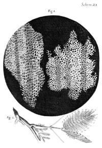 Зріз клітини на малюнку роберта гука