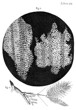 250px-Cork_Micrographia_Hooke