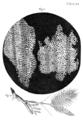 The Project Gutenberg eBook, Micrographia, by Robert Hooke