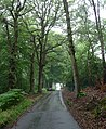 Country road near Hermitage (1) - geograph.org.uk - 2281482.jpg