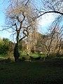 Coy Pond Gardens, small bridge over stream - geograph.org.uk - 658888.jpg