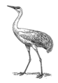 Crane 1 (PSF).png