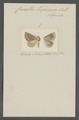 Crocallis - Print - Iconographia Zoologica - Special Collections University of Amsterdam - UBAINV0274 059 03 0021.tif