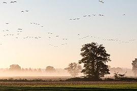 Dülmen, Kirchspiel, Börnste, Felder und Bäume -- 2017 -- 3238.jpg
