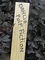 Dahlia 'Pulp Fiction' 3.jpg