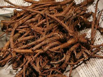 Dandelion coffee - Harvested roots of the dandelion plant. Each plant has one taproot.