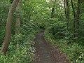 Daneshill Parks Woods - geograph.org.uk - 863117.jpg