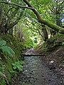 Dark Lane, medieval holloway - geograph.org.uk - 841842.jpg