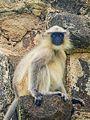 Daulatabad, Aurangabad - panoramio (27).jpg