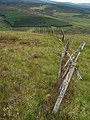 Deer fence, Craigie Broch - geograph.org.uk - 497640.jpg