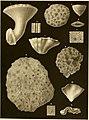 Denkschriften der Kaiserlichen Akademie der Wissenschaften - Mathematisch-Naturwissenschaftliche Classe (1854) (20841467252).jpg