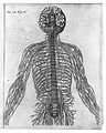 Descartes. Diagram of the brain and nerves Wellcome L0017000.jpg
