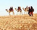 Desert 101.jpg