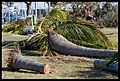 Destruction of Woody Point-15-Large (2924123262).jpg