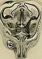 Die Entwickelung des menschlichen Gehirns - während der ersten Monate - Untersuchungsergebnisse (1904) (20726013299).jpg
