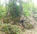 Dilijan National Park, Path way to Aghavnavank 25.jpg