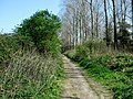 Disused Railway Track - geograph.org.uk - 411535.jpg