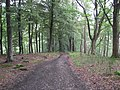 Ditch Clough Plantation - Footpath View - geograph.org.uk - 870742.jpg