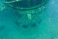 Diving Ko Tao, Thailand 1162.jpg