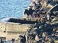 Diving at Hawkcraig Point - geograph.org.uk - 1099006.jpg