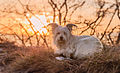 Dog at Sunrise.jpg