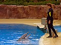 Dolphin Training (7980956158).jpg
