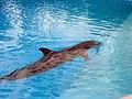 Dolphins (7981091075).jpg