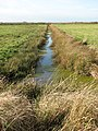 Drainage ditch in Thurlton Marshes - geograph.org.uk - 1578632.jpg
