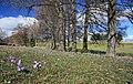 Drebacher Krokuswiesen 2H1A4685WI.jpg