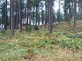 Dunes among the trees - geograph.org.uk - 1560421.jpg