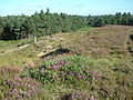 Dur Hill Down, New Forest - geograph.org.uk - 34403.jpg