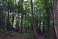 Durncomb's Copse - geograph.org.uk - 37392.jpg