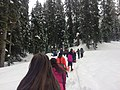 EKIP Snow Ecology Snowshoe Trek on Snoqualmie Pass with Concord International Elementary School 4th Graders, Mt. Baker-Snoqualmie National Forest (32418323013).jpg